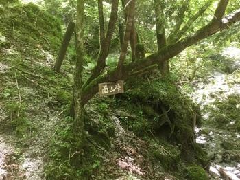 丹沢登山道10.JPG